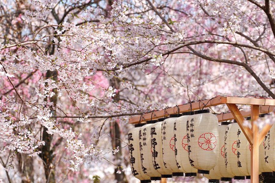 Destination-Tokyo_3_Hanami-1-1468930735