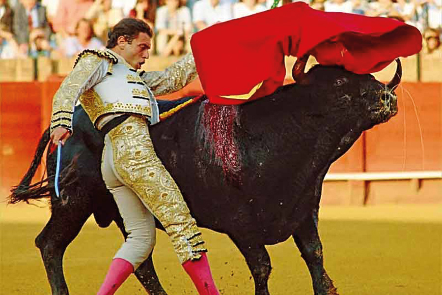 bullfight-seville