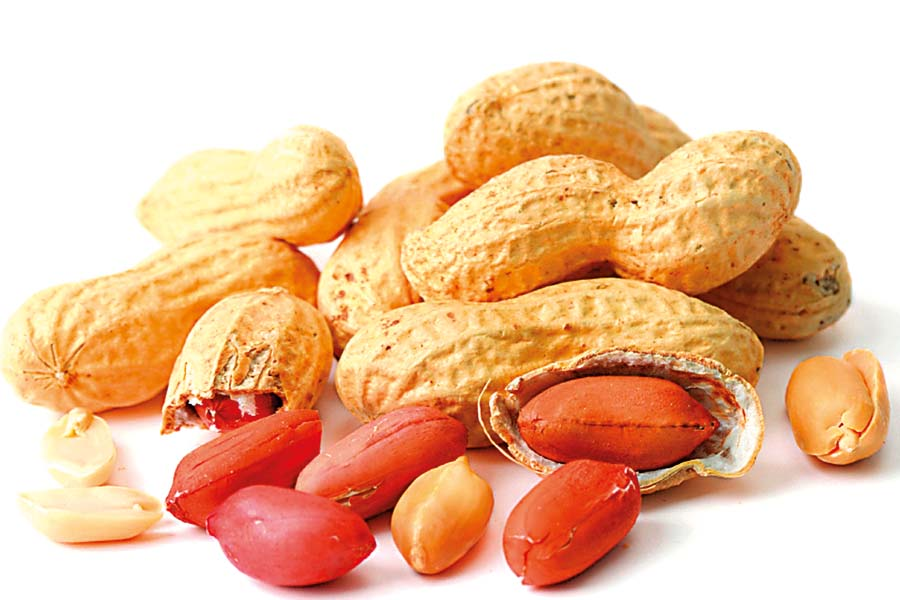 Peanuts in Shell New2